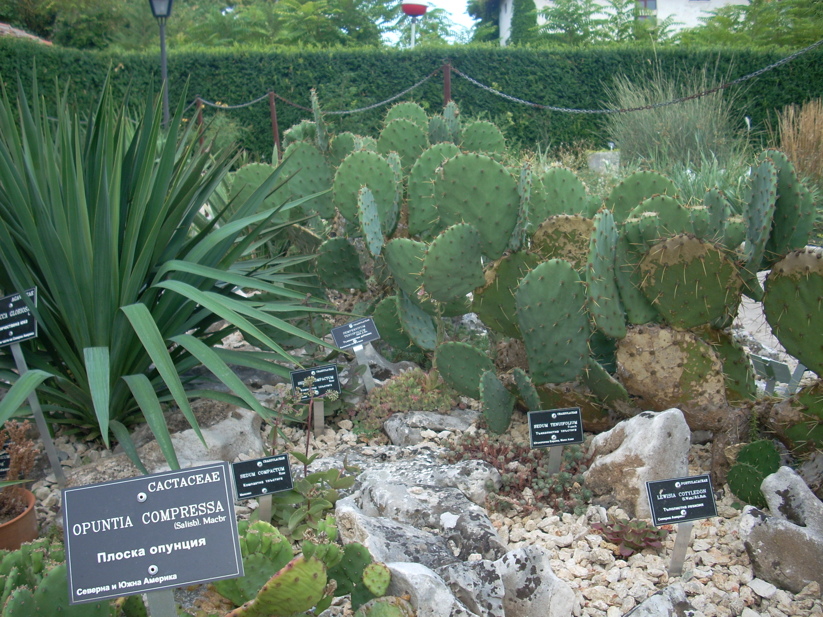 Balchik-Botanical-garden-cactuses-second-largest-europe-collection-of-cactuses-in-Bulgaria