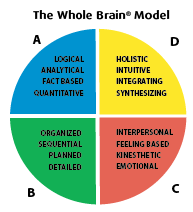HBDI The whole brain model