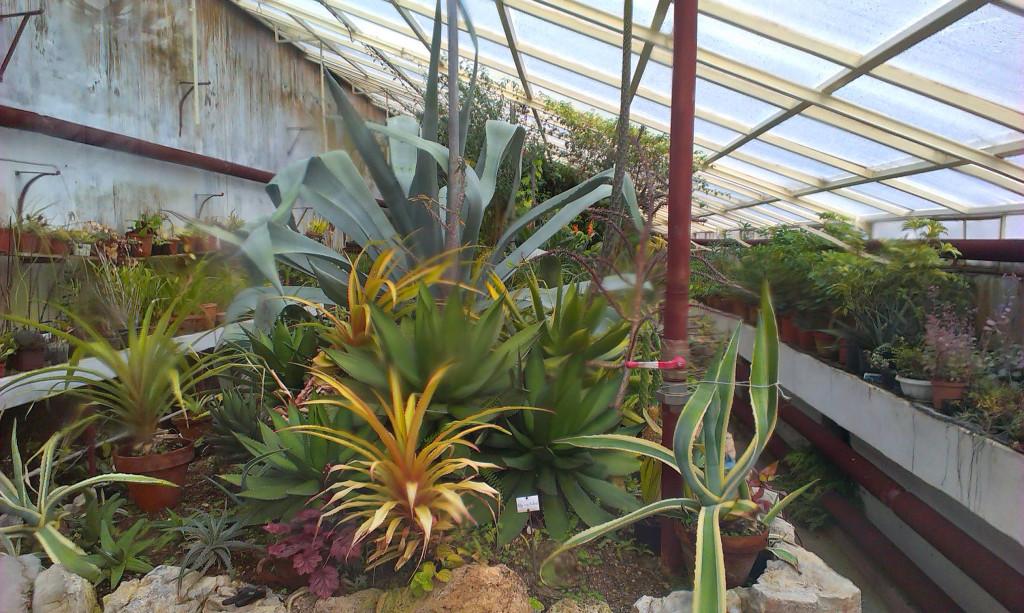 Vrana-palace-unique-plant-conservatory-1024x613