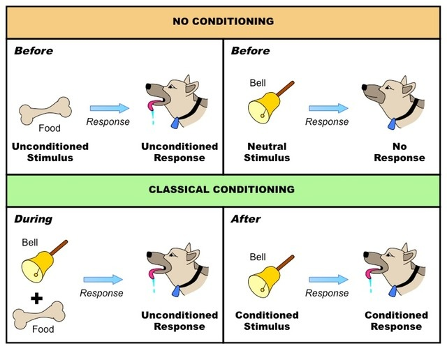 pavlov-dog-conditioning-experiment-operant-conditioning