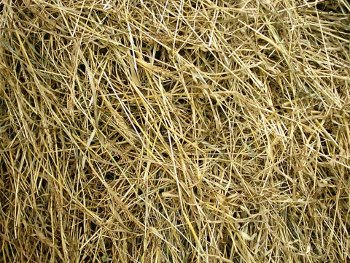 seno serbian church hay haystack, bundle of hay picture