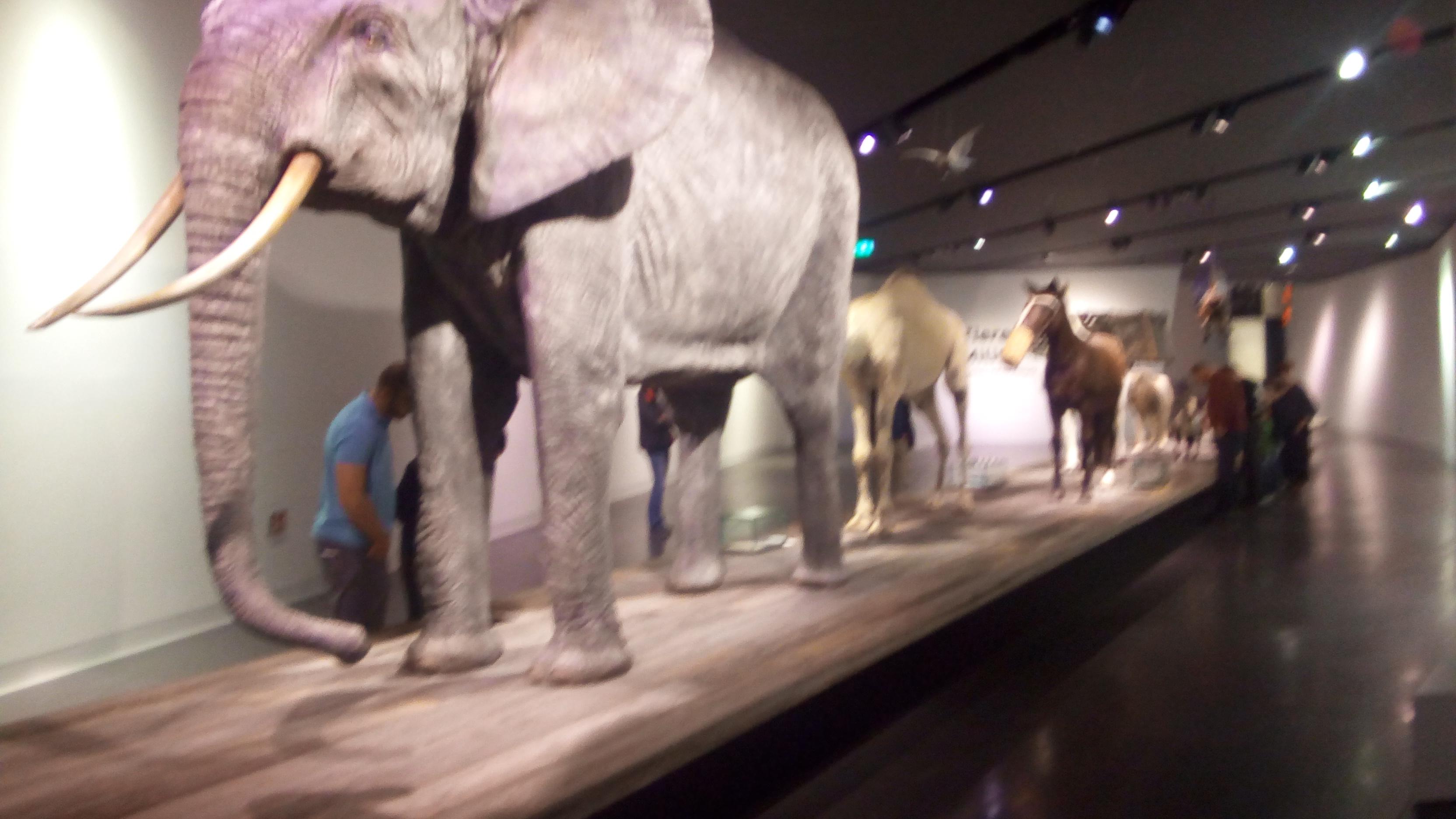 war-museum-3-animals-and-war
