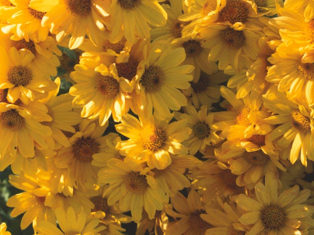 White And Yellow Flowers Tumblr   www.pixshark.com